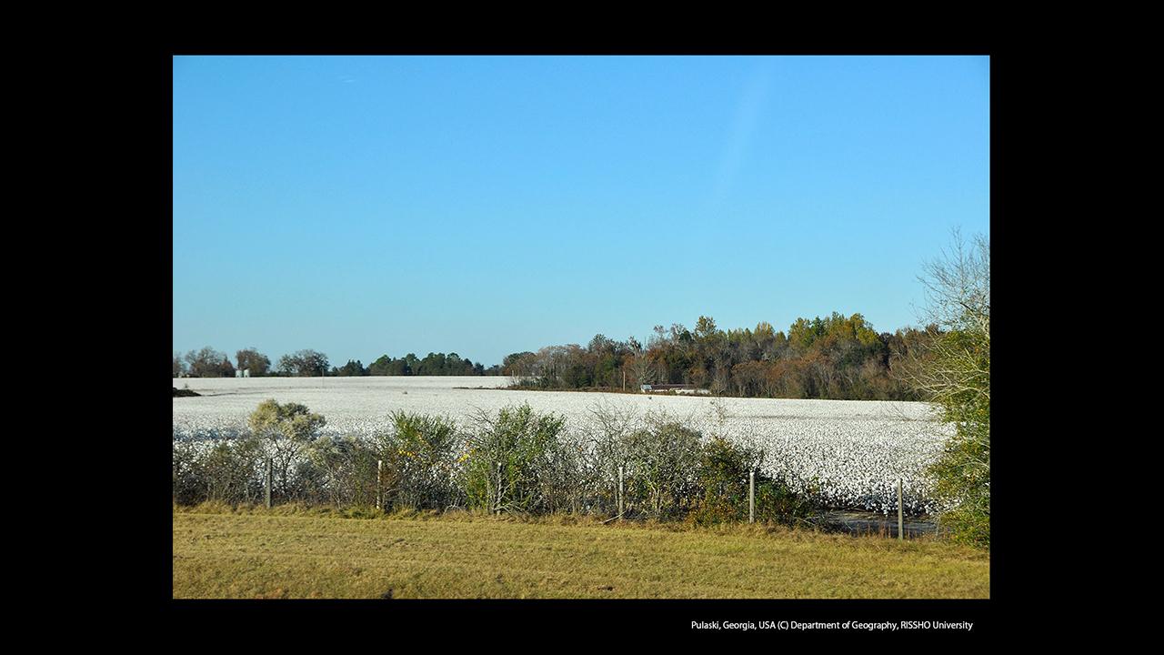 アメリカ合衆国ジョージア州の綿花畑