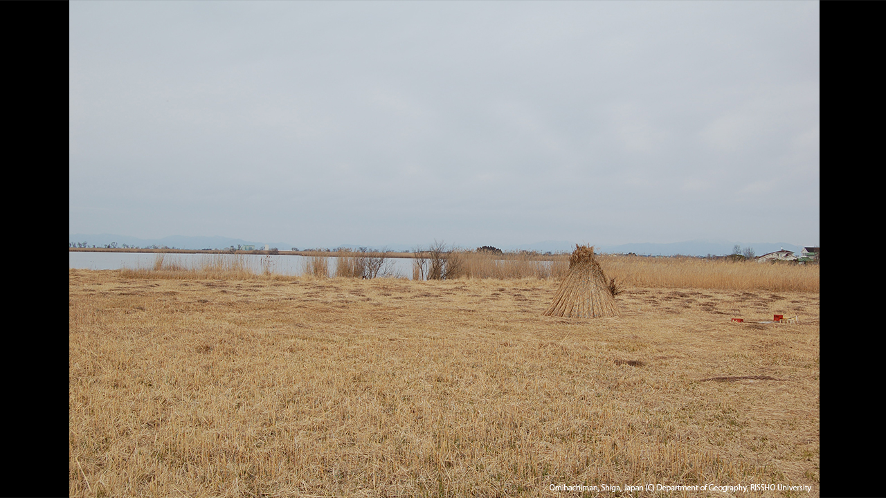ヨシの刈取り 西の湖