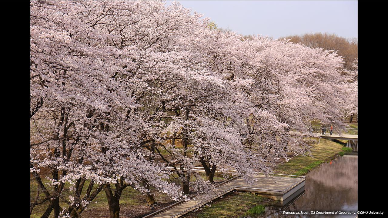 熊谷キャンパスの春